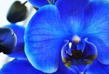 •Orchids•