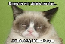 Grumpy Cat! ♡
