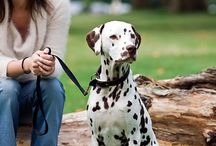 Dog Care / Discover how to take care of your lovely dog here. Proven tips for having an adorable puppy.
