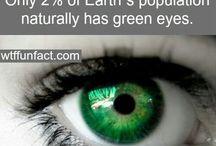 Zielonooka