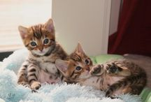 Bengals / by Marie Brais