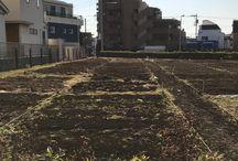 福畑 / 私の畑「福畑」@二子玉川の記録です