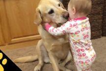 Σκυλια / Σκυλια
