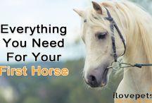 Horses As Pets