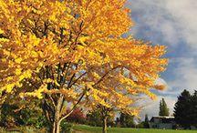 Garten - Lebkuchenbaum