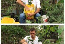 Fruit tree propagation