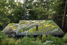 groene daken - green roofs [inspiratie]
