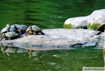 Wonders of Wetlands / Habitat for turtles, frogs, herons, dragonflies, muskrat and many beautiful creatures! / by Adkins Arboretum