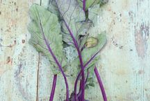Vegetables to paint