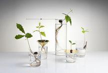 Pflanzen im Haus