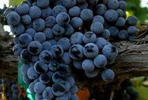 Blueberry Finn