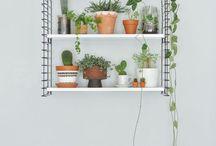 sugestões de plantas interior e exterior