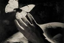 butterflies and other beautiful things! / by Yessica Sinisterra
