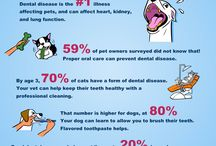 Pet Smiles / Check out pet smiles and tips for taking care of your pet's teeth