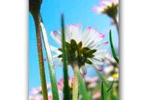 Frühlingsmotive / Blumen, Frühlingsblüher und erste Sonnenstrahlen - Motivdrucke auf Papier und Textilbanner mit frühlingshaften Motiven.