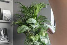 Plant Huiskamer