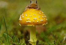 Mushrooms / g