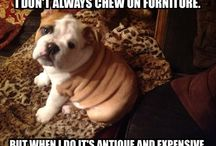 Cute & Funny Pet Memes / Pet humor. / by Ridgewood Veterinary Hospital