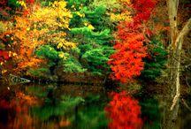 ősz gyõnyörű színei