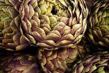 photo . plants