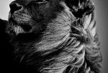 Voyages photo en Afrique / Safari photographique au Kenya, aux cotés de Laurent BAHEUX. Connu pour son travail en Noir et Blanc, exposé chez Yellow Korner, il transmettra ses savoirs avec pédagogie.  Voici quelques photos pour illustrer ce voyage photo ! Plus d'informations ici -> http://bit.ly/KENYAVPP.