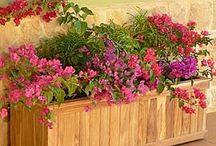 Trough Planters / by Susan Dennis