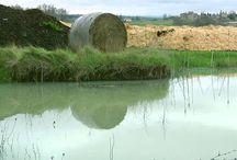 Le Terre di Ecor / Video dei nostri prodotti e produttori di alimenti biologici e biodinamici