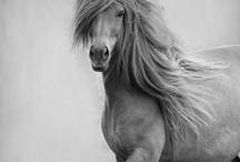 horses / by Frances Raptopulos