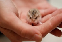 TOO CUTE! / ANYTHING CUTE, SMALL, UNUSUAL, ADORABLE!