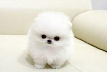 cute as heack
