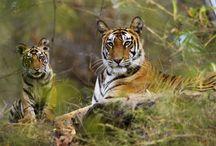wild life Kerala