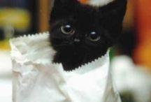 Gatos e Gatinhos / Baby
