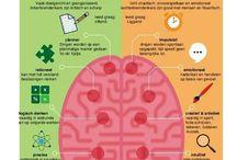 het  brein project