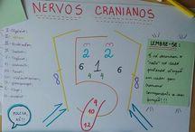 Neuroanestesia