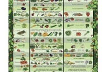 Great Plant Combinations