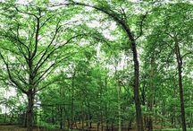 Wald XXL Panoramen