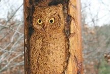 wood carvings / by Donna N