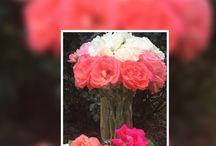 Roses & I