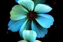 Цвет палитра