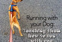 run with  a dog