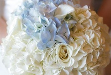 Wedding / Wedding ideas / by Tracey Anna
