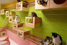 Cats -Cicás