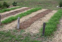 Cover crops for gardens