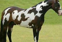 Horses / by Reagan Savoie