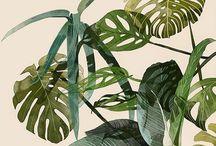 Planten interieur