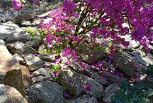 gnejsy.pl / kamień naturalny do ogrodu, kruszywa dekoracyjne, kora kamienna, płytka, głazy ogrodowe, szpilki, otoczaki, stone bark, garden boulders, monoliths, pebbles,