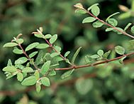 Hill Plants
