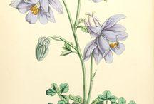 Vintage floral pics