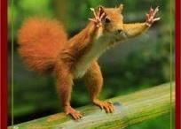 bobbysue's nuts!