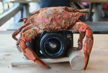 2015 Crab Deck Crawl & Photo Scavenger Hunt! / Crab Decks & Tiki Bars of the Chesapeake Bay teamed up with Marinalife Magazine last summer to host the 2015 Crab Deck Crawl & Photo Scavenger Hunt.